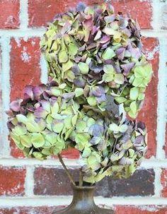 Dried Burgandy Hydrangea  Burgandy Flowers  Wedding Flowers