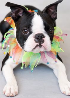 Party Pooper by hopeimages on Etsy...I wonder where they got that collar