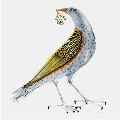 'Mistle Thrush' by Bea Forshall
