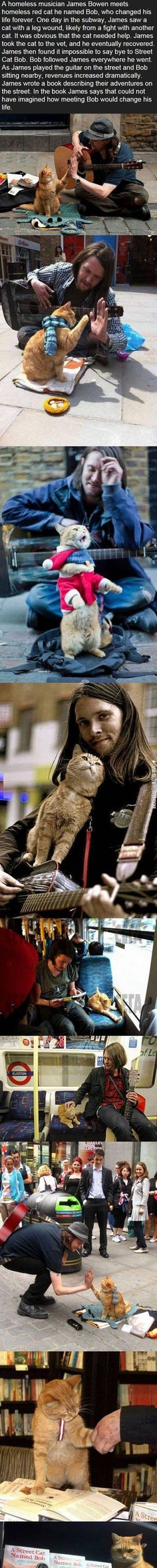 A street cat named Bob.