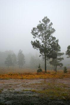 www.elfoton.com #elfoton14 @elfoton_es #categoria #paisaje #sinfiltros #instagram Usuario: Goku_Abreu (República Dominicana) - Valle Nuevo - Tomada en Constanza el 09/12/13