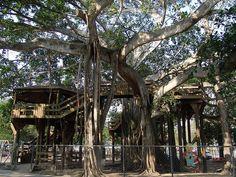 Casa del Arbol Parque Colon Aguadilla Puerto Rico