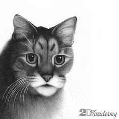 Simon. He is currently 21 years young :: realistic hand drawn custom portrait. Graphite pencils on Bristol board.