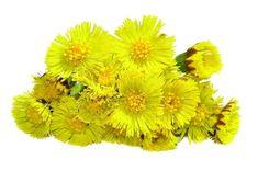 Cas, Nature, Plants, Gardening, Fresh, Marmalade, Naturaleza, Lawn And Garden, Plant