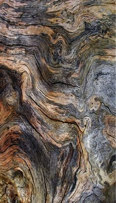 Best Home Plants Earth Texture, Wood Texture, Texture Art, Natural Texture, Patterns In Nature, Textures Patterns, Art Grunge, Natural Structures, Plant Aesthetic