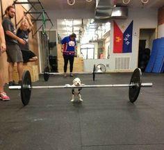 Puppy power! Via @poniesandpizza on Twitter