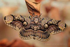 la polilla de brahmin se convierte en esta bella mariposa