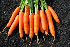 9 Makanan Bikin Wajah Kamu Awet Muda Dan Segar http://www.perutgendut.com/read/9-makanan-bikin-wajah-kamu-awet-muda-dan-segar/2816 #Food #Kuliner #Health