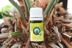 Picture of Frankincense Essential Oil Organic Lemongrass Essential Oil, Frankincense Essential Oil, Organic Essential Oils, Essential Oil Blends, Organic Oil, Aphrodite, Lemon Grass, Natural Remedies, Health And Wellness