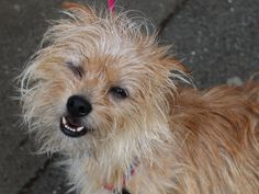 Woodruff is available at the San Francisco SPCA.