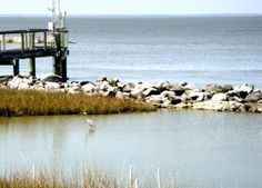 Dauphin Island Sea Lab Estuarium - Dauphin Island - Reviews of Dauphin Island Sea Lab Estuarium - TripAdvisor