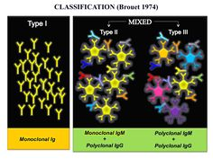 Classification of cryoglobulinemia