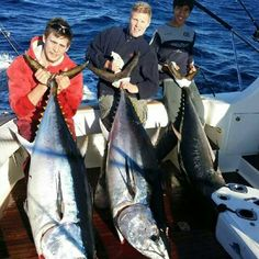 Game fishing charter off Sydney. We chase Marlin, Tuna and sharks depending on season. Fishing Charters, Sharks, Tuna, Sydney, Seasons, Adventure, Game, Shark, Venison