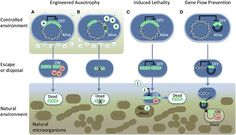 A review about biosaftey: Preparing synthetic biology for the world bitDOTly/W8eV9J Cell Structure, Systems Biology, Biotechnology, Map, Life, Location Map, Maps