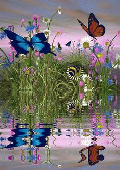 BUTTERFLIES WATER REFLECTION GIF