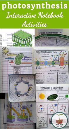 15 activities for your photosynthesis science interactive notebook- chloroplast structure, leaf structure, light reactions and dark reactions! Biology Lessons, Science Lessons, Science Activities, Life Science, Biology Classroom, Biology Teacher, Teaching Biology, High School Biology, Middle School Science