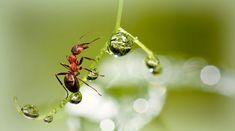 Mravce – inžinieri našej záhrady - Záhrada.sk Drop Earrings, Jewelry, Jewellery Making, Jewelery, Drop Earring, Jewlery, Jewels, Jewerly, Dangle Earrings