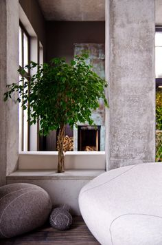 Loft Apartment by 2B Group seating with a plant