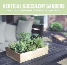 How to create a sturdy base for a vertical succulent garden