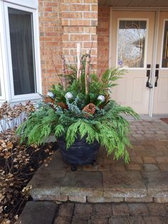 How to plant an outdoor winter container - photo tutorial
