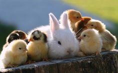 Bunny-and-Chicks-Wallpapers.jpg (1920×1200)