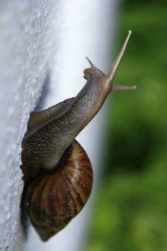 snail | Flickr