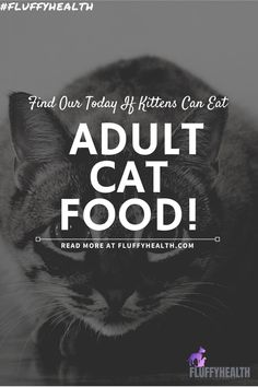 In this article, we will present to you all the information you need to know about kittens' food and, as a result, answer your question of when can kittens eat adult cat food. Read More To Find Out When!! #fluffyhealth #cats #catfood #kittensfood #catlife #cathealth #catfact Cat Health Care, Dog Health Tips, Different Breeds Of Cats, Healthy Cat Food, Kitten Food, Cat Hacks, Fluffy Kittens, Cat Care Tips, Cat Life