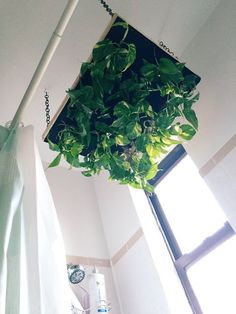 Indoors or Out Tips for Creating a Vertical Garden Apartment Therapy Diy Planters, Hanging Planters, Planter Ideas, Hanging Gardens, Succulent Planters, Succulent Wall, Apartment Therapy, Shower Plant, Br House