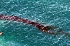 Rena Sinking on Astrolabe Reef, Rena Disaster, Oil Spill, Tauranga, New Zealand