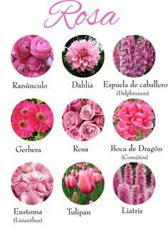Las flores de color rosa que más alegrarán nuestro ramo de novia. Pink flowers.