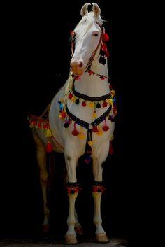 Hobby horse tassles