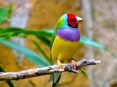 Image result for beautiful birds images