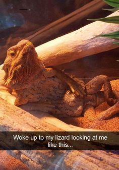 271 Funny Animal Snapchats That Will Leave You With The Biggest Smile - #beardsfunny - Want to know what's better than seeing what your friend had for dinner on social media? Adorable animals getting into wacky hijinx. Check out our hilarious list of animals caught on Snapchat!...