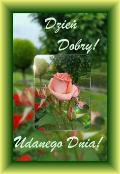 Kartka pod tytułem Ode mnie róża ta i życzenia udanego dnia! Good Morning, Pictures, Fotografia, Good Night Greetings, Bom Dia, Photos, Buen Dia, Bonjour, Buongiorno
