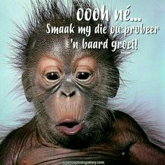 Baby Orangutan - Orangutan (Pongo pygmaeus), 4 weeks old. Monkey Pictures, Funny Pictures, Animal Pictures, Cute Baby Animals, Funny Animals, Animal Babies, Funny Babies, Cute Babies, Create Your Own Meme