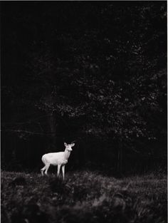 """jmsdev: """" In love with these photographs made by George Shiras in the late… Forest Creatures, Wild Nature, Contemporary Photography, Dark Forest, Artemis, Night Photography, Go Outside, Hush Hush, Game Design"""