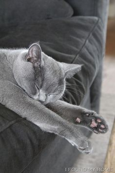 grey kitty and sofa...pink pads