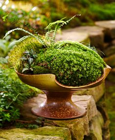 indoor gardening Moss dish gardens allow you to get up close and personal with a lush green landscape. Our step-by-step instructions get you started, and 6 dish garden designs with complete plant lists give you inspiration for your own creation. Container Plants, Container Gardening, Flower Gardening, Indoor Gardening Supplies, Dish Garden, Green Landscape, Landscape Fabric, Paludarium, Garden Care
