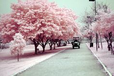 I want to go to this pink wonderland