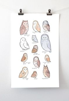Owls of North America Illustrated Chart - Whimsical Art Print