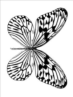 Popular Butterfly Coloring Pages For Kids 81 Butterfly Coloring Pages