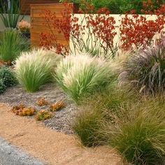 San Diego Home decomposed xeriscape garden