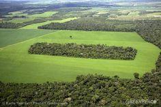 É possível conter o desmatamento da Amazônia | Brasil