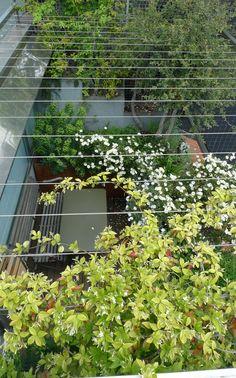 Balcony in Milan.  Cosmos bipinnatus?  Cristina Mazzucchelli - Terrazzi