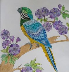 Blauw gele ara uit mijn wonderlijke wereld-Margreet Coloring Books, Coloring Pages, Pretty Boys, Wonders Of The World, Rooster, How To Draw Hands, Mandala, Arts And Crafts, Birds