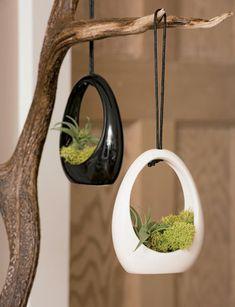 hanging Air Plant pendants