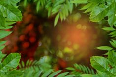 tree and bokeh background
