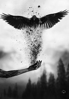 Surreal Art Photography Photo Manipulation Fantasy Ideas For 2019 Dark Fantasy Art, Dark Art, Raabe Tattoo, Photography Photos, Creative Photography, Artistic Photography, Imagenes Dark, Photoshopped Animals, Raven Art