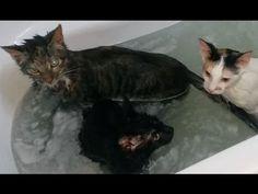 4 sad cats are sitting in a bathtub