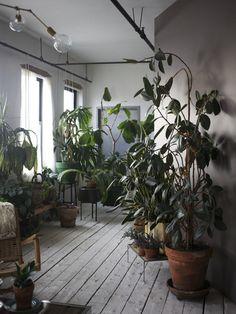 Houseplant forest. Emily Johnston | Shabd Simon-Alexander, Brooklyn, 2013